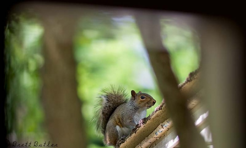 Squirrel_16-06-2008.jpg