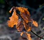 Autumn-Leaf-small